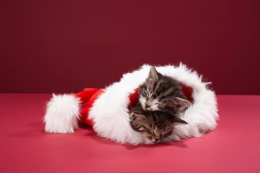 Santa Hat「Kittens asleep together in Christmas hat」:スマホ壁紙(4)