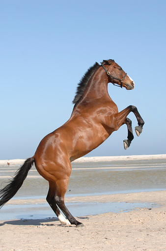 Horse「Horse rearing」:スマホ壁紙(4)