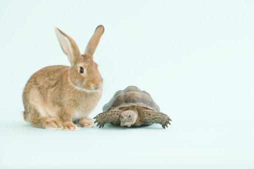 Fairy Tale「Tortoise and Hare」:スマホ壁紙(19)