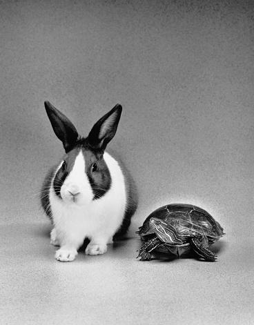 うさぎ「Tortoise and Hare」:スマホ壁紙(6)