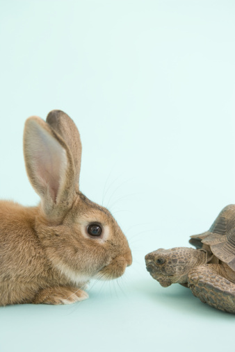 Fairy Tale「Tortoise and Hare, face to face」:スマホ壁紙(5)