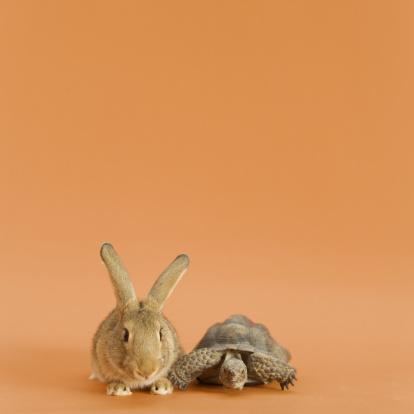 Fairy Tale「Tortoise and Hare, orange background」:スマホ壁紙(14)