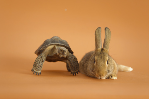 Fairy Tale「Tortoise and Hare, orange background」:スマホ壁紙(4)