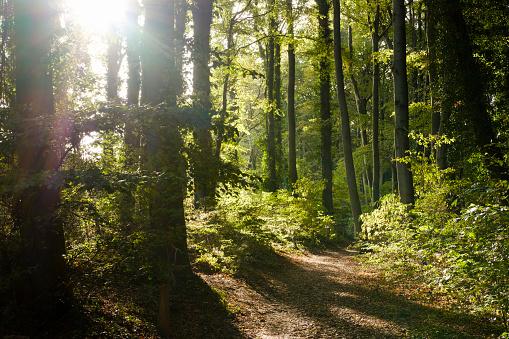 Back Lit「Germany, Usedom, Koserow, Streckelsberg, forest at backlight」:スマホ壁紙(11)