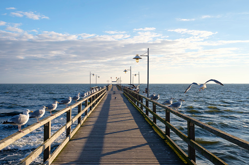 Footbridge「Germany, Usedom, Bansin, seagulls at pier」:スマホ壁紙(19)