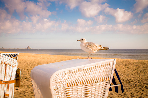 Seagull「Germany, Usedom, Heringsdorf, seagull on hooded beach chair」:スマホ壁紙(11)