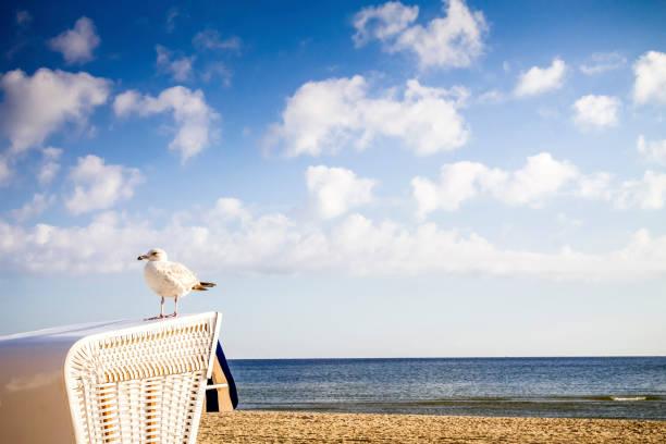 Germany, Usedom Island, Ahlbeck, seagull standing on hooded beach chair at sunlight:スマホ壁紙(壁紙.com)