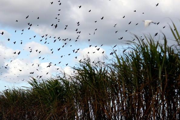 Florida - US State「Florida Acquires U.S. Sugar Land As Part Of Everglades Restoration」:写真・画像(4)[壁紙.com]