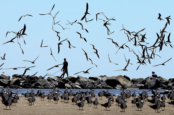 Deepwater Horizon「Crews Formally End Clean-up of BP Oil Spill」:写真・画像(12)[壁紙.com]