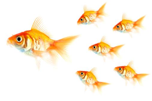 金魚「フォローミー」:スマホ壁紙(15)