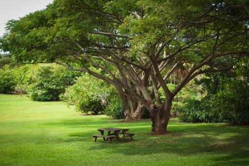 Picnic Table「Tropical Garden with Picnic Benches」:スマホ壁紙(14)