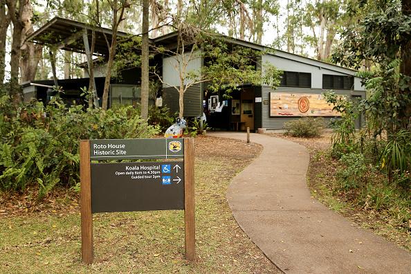 Nathan Edwards「Koala Hospital Works To Save Injured Animals Following Bushfires Across Eastern Australia」:写真・画像(14)[壁紙.com]