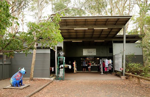 Port Macquarie「Koala Hospital Works To Save Injured Animals Following Bushfires Across Eastern Australia」:写真・画像(14)[壁紙.com]