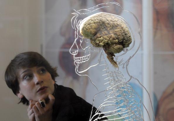 トップランキング「The Real Brain Exhibit @Bristol Science Centre」:写真・画像(8)[壁紙.com]