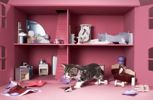 Furious「Kitten in wrecked doll's house」:スマホ壁紙(16)
