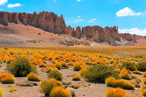 Andean Highlands「Idyllic Salar de Tara, gold colored steppe bush - Volcanoes and Idyllic Atacama Desert altiplano, volcanic landscape panorama – San Pedro de Atacama, Chile, Bolívia and Argentina border」:スマホ壁紙(13)