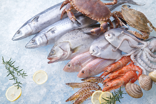 Octopus「seafood」:スマホ壁紙(16)