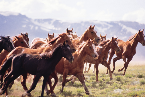 Horse「Herd of horses running in Fairplay , Colorado」:スマホ壁紙(0)