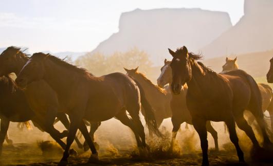 Horse「Herd of horses running in Utah desert.」:スマホ壁紙(3)