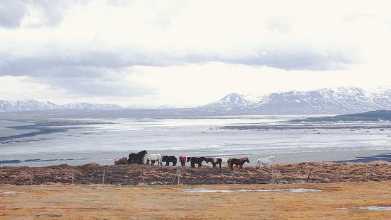 Animals In The Wild「Herd of horses」:スマホ壁紙(10)