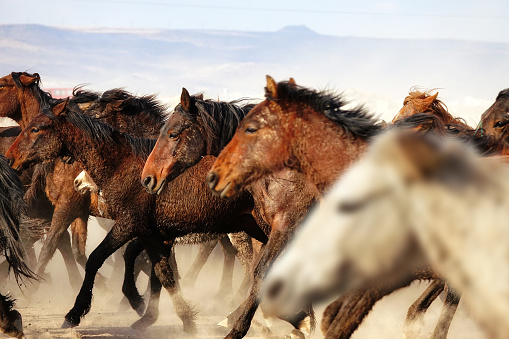 Stallion「herd of horses in dusty landscape」:スマホ壁紙(10)