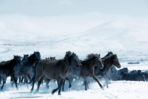 Stallion「Herd of horses are running on a lake」:スマホ壁紙(1)