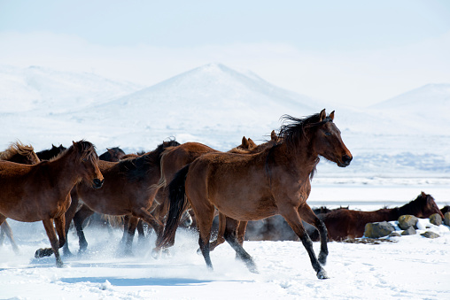 Stallion「Herd of horses are running on a lake」:スマホ壁紙(0)