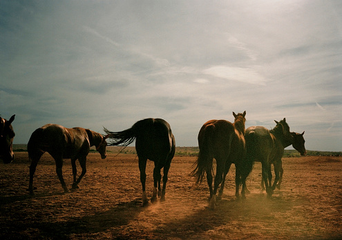 Southern USA「Herd of Horses, Rear View, Texas, USA」:スマホ壁紙(5)