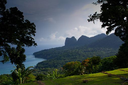 Rainforest「Sao Tomé and Principe」:スマホ壁紙(15)