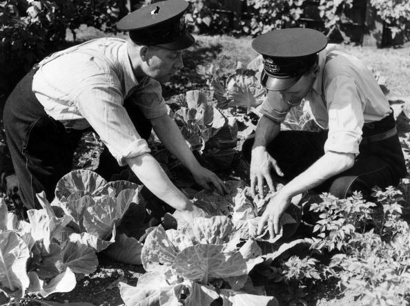 Recreational Pursuit「Vegetable Postmen」:写真・画像(6)[壁紙.com]