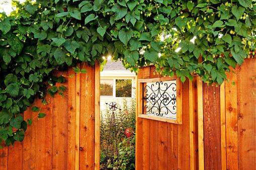 Trellis「Sunlight filters through a hops plant」:スマホ壁紙(18)