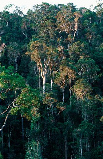 Montane Rainforest「Montane Rainforest in Madagascar」:スマホ壁紙(13)