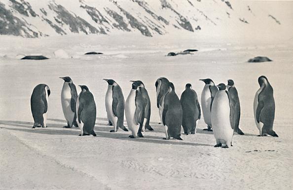 Ski Pole「Emperor Penguins」:写真・画像(16)[壁紙.com]