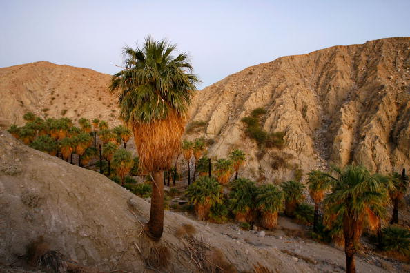 Desert Oasis「Researchers Predict Major Earthquake To Hit California In Next 30 Year」:写真・画像(14)[壁紙.com]