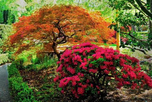 Japanese Maple「Garden in the spring」:スマホ壁紙(14)