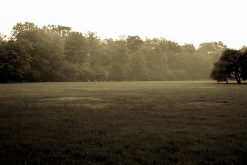 Sepia Toned「Landscape, mystery park in the fog, sepia toned」:スマホ壁紙(0)