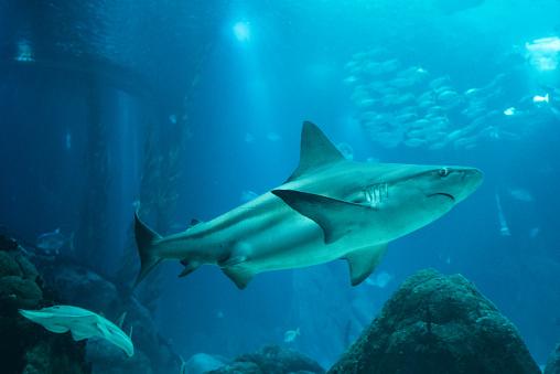 Whale shark「Sea life」:スマホ壁紙(7)