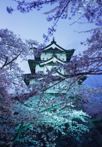 夜桜「Hirosaki Castle in spring」:スマホ壁紙(5)