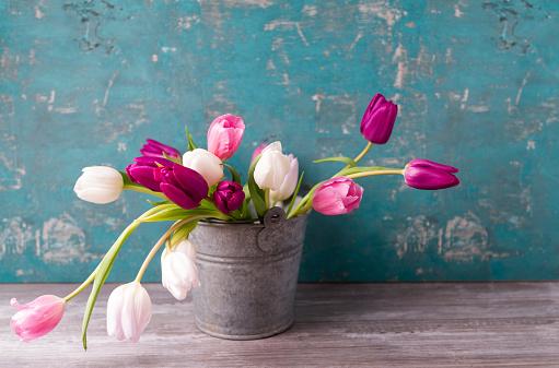 チューリップ「Tulips in a pail」:スマホ壁紙(16)