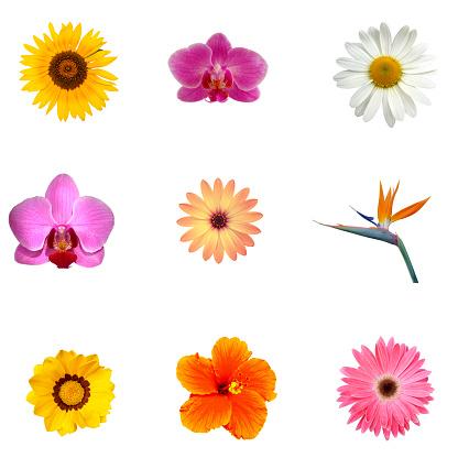 Frangipani「Different exotic flowers XXXL」:スマホ壁紙(15)