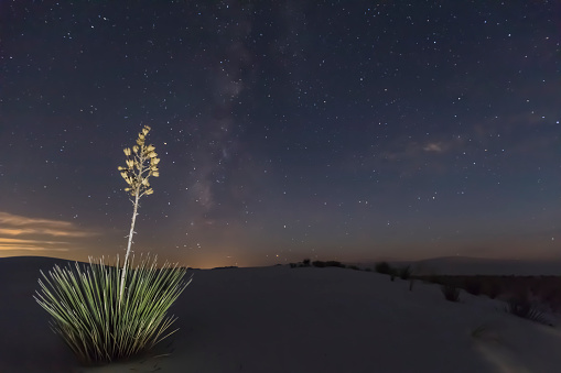 star sky「USA, New Mexico, Chihuahua Desert, White Sands National Monument, soap tree at night」:スマホ壁紙(19)