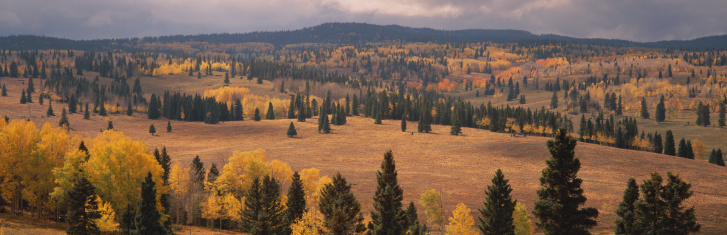 Carson National Forest「USA, New Mexico, Carson National Forest scenic, autumn」:スマホ壁紙(2)