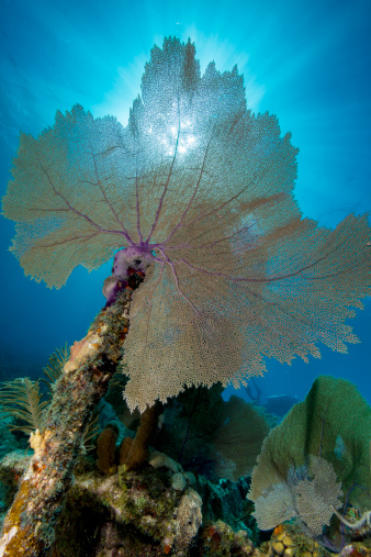 Soft Coral「Sea fan on Civil War Wreck.」:スマホ壁紙(19)