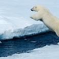 白熊壁紙の画像(壁紙.com)