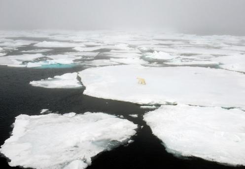 Polar Bear「Polar Bear (Ursus maritimus) Walking on pack ice, 81 degrees N., Svalbard, Arctic Norway」:スマホ壁紙(18)