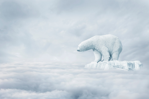 Polar Bear「Polar bear floating on ice floe in clouds」:スマホ壁紙(14)