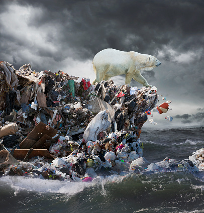 Polar Bear「Polar Bear Garbage Challenge」:スマホ壁紙(3)
