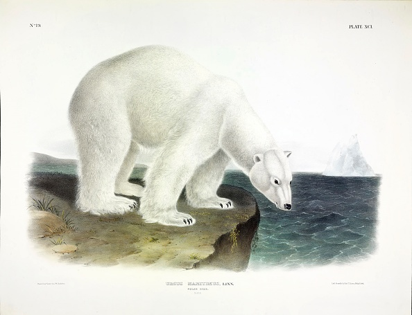 Quadrupedalism「Polar Bear」:写真・画像(2)[壁紙.com]