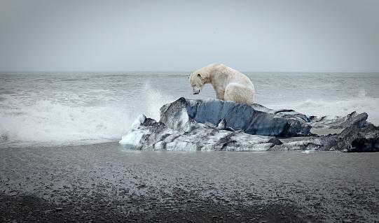 Arctic Ocean「Polar bear on the floe」:スマホ壁紙(9)