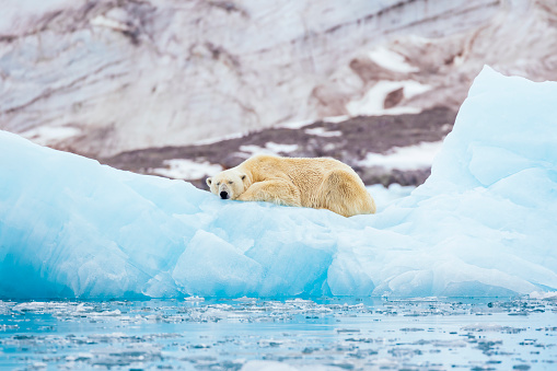 Svalbard Islands「Polar bear on an iceberg」:スマホ壁紙(18)